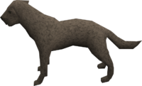 Labrador (grey) pet