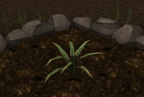 File:Pineapple plant 3.png