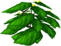 Squiffberry bush.png