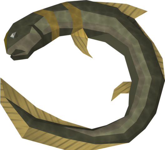 File:Raw short-finned eel detail.png