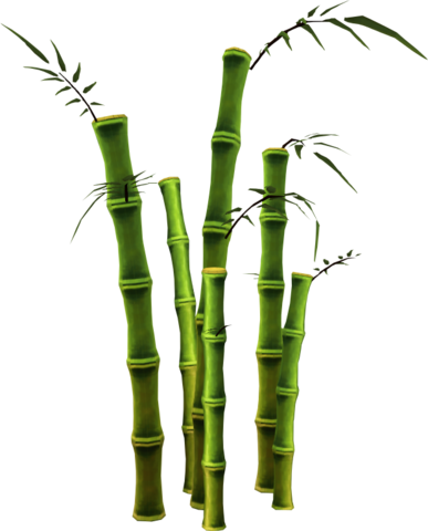 File:Bamboo (tree).png