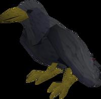 Raven (black) pet