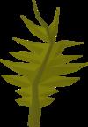 Swamp weed detail