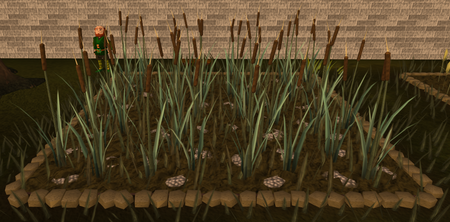 Reeds5