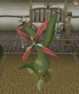 Jade vine branch pruning stage 2