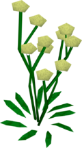 Daffodils built