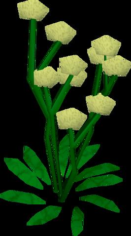 File:Daffodils built.png