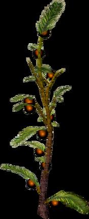 Cocoaberry bush