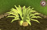 Pineapple plant 6