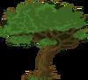 Tree (clan)