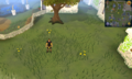 Scan clue Falador south of Wyson the gardener's house.png