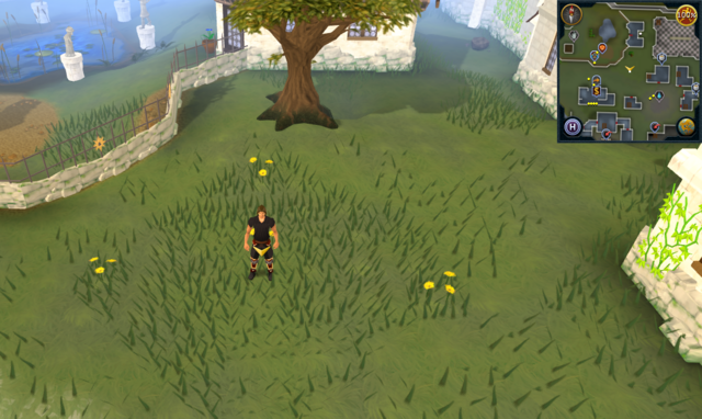 File:Scan clue Falador south of Wyson the gardener's house.png