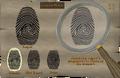 HAM fingerprint.png