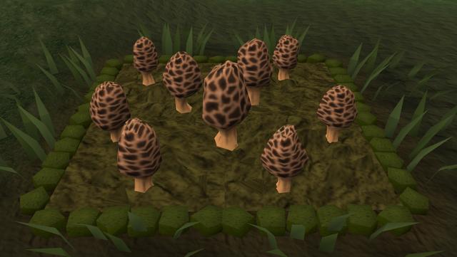 File:Morchella mushroom4.png