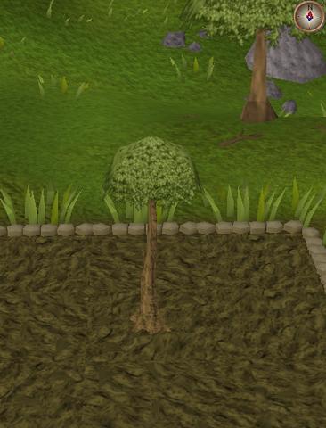 File:Spirit tree5.png