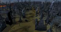 Wilderness wood pathway
