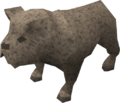 Bulldog puppy (grey) pet.png