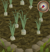 File:Onion4.png