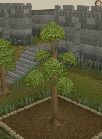 File:Yew5.png