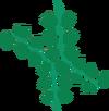 Seaweed detail