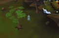 Compass clue Draynor east of pale wisp colony.png