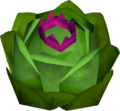 Crispy the cabbage detail.png