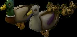 Mega ducklings pet
