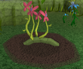 Red vine blossom5.png