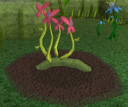 Red vine blossom5