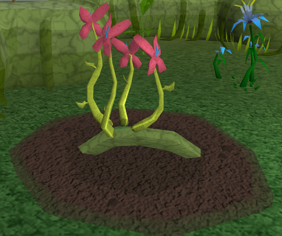 File:Red vine blossom5.png