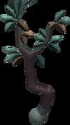 Tangle Gum Tree