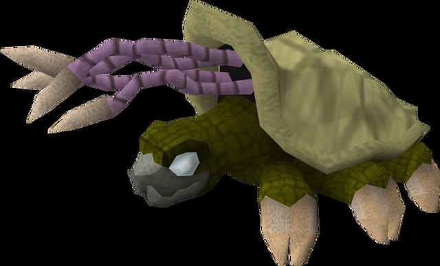 File:Warped tortoise.png