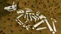 Digsite buried skeleton.png