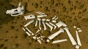 Digsite buried skeleton
