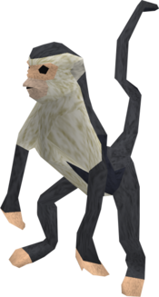 Monkey (black and white) pet