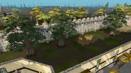 Varrock Palace yew trees