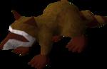 Baby raccoon (red) pet