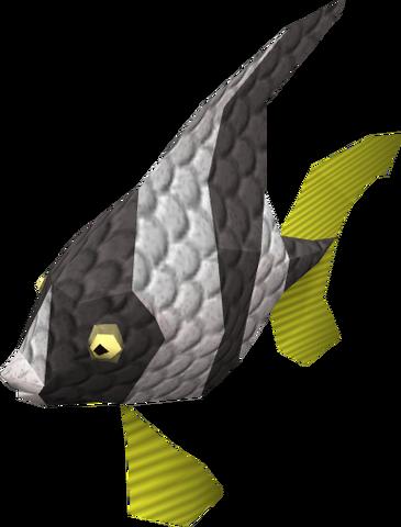 File:Angel Fish.png