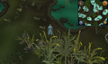 Compass clue Mort Myre Swamp north of fairy ring.png