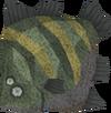 Raw giant flatfish (Sinkholes) detail
