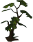 File:Healthy sapling detail.png