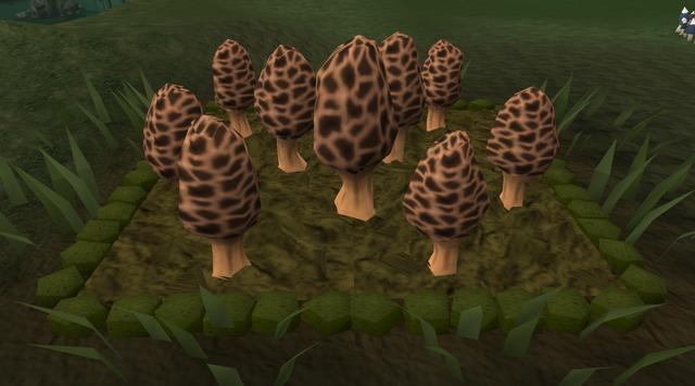 File:Morchella mushroom5.png
