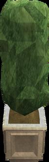 Sculpted evergreen