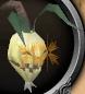 File:Evil turnip chathead.png