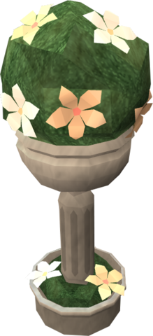 File:Spherical evergreen.png