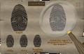Twins fingerprint 1.png