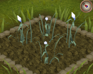 File:White lily4.png