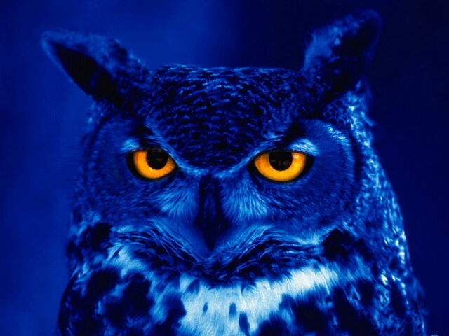 File:Nightowl1.jpg