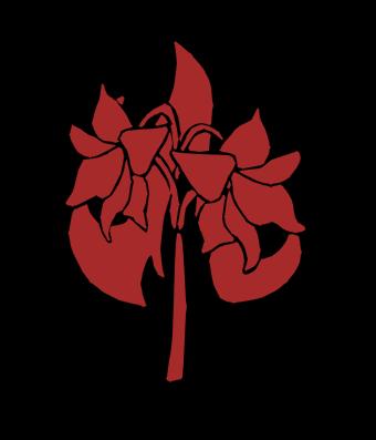 File:Flaming Amaryllis.png