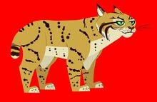 Bobcat-wild-kratts
